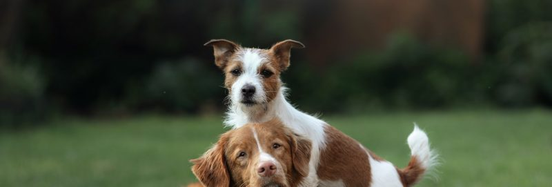 Two dogs playing outside